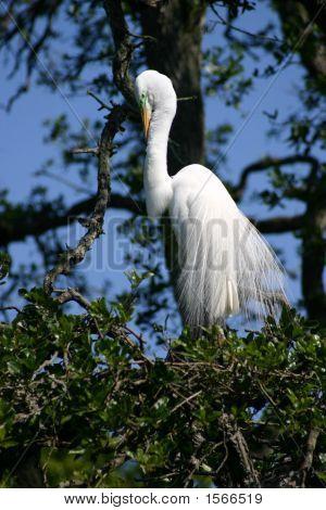 White Bird Long Feathers