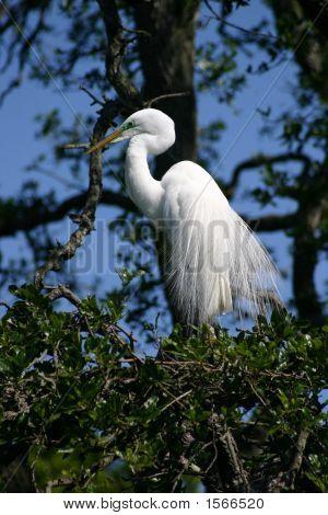 Large White Bird