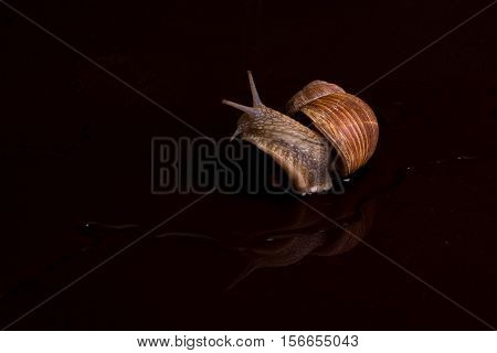 Snails / Snails crawling slowly on the table