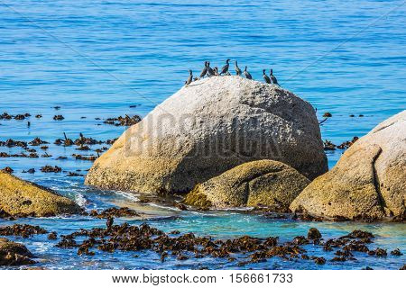 Large boulders on the beach of the Atlantic Ocean. Boulders Penguin Colony in the Table Mountain National Park, South Africa. The concept of ecotourism