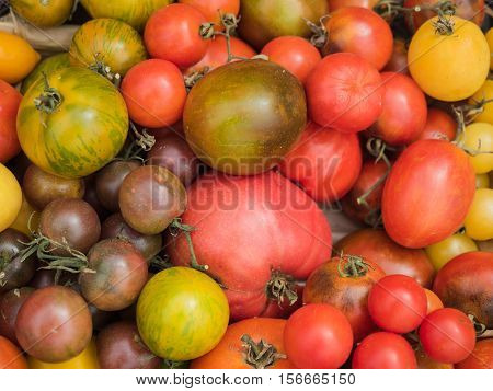 Background of a stacked multicolored tomato. Multicolored tomato pattern. Picture of the red, yellow, brown and green tomato.