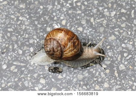 Slimy snail moving slowly on marble stone