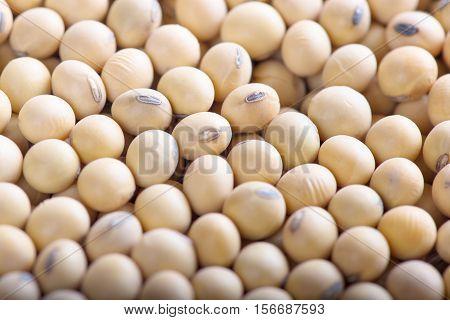 Soybean background. soybean close up. organic soybean.