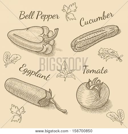 Set of vegetables with bell pepper, eggplant, cucumber, tomato and herbs for restaurant menu. Vintage sketch drawing. Vector EPS10 illustration.