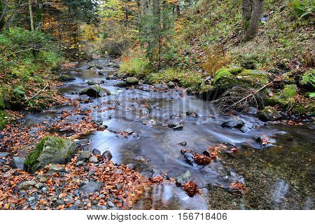 Ribbon of crystal clear mountain brook flowing through autumn beech and fir forest
