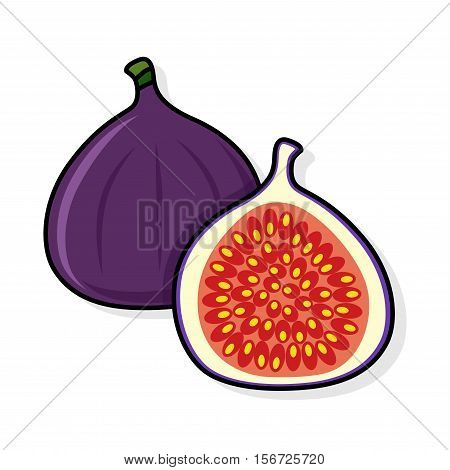 Fig on a white background. Fig sliced. fig illustration. fig vector. fig poster. fig vector illustration.