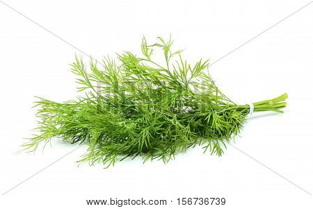 Fresh dill isolated on a white background.