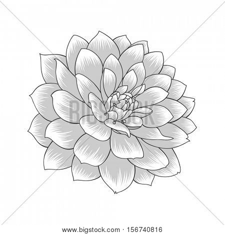 Abstract monochrome floral background. Vector flower dahlia. Element for design.