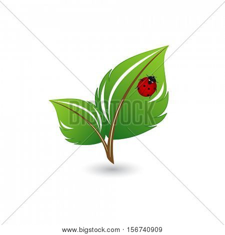 Green leaves with ladybug . Element for design.