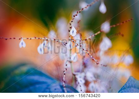 Beautiful fairy white small flowers on colorful dreamy magic yellow red blurry background soft selective focus macro closeup nature image shot copyspace for text