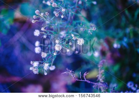 Beautiful fairy pink white small flowers on colorful dreamy magic green blue purple blurry background soft selective focus macro closeup nature image shot copyspace for text