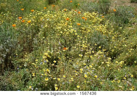 Yellow Wildflowers 108
