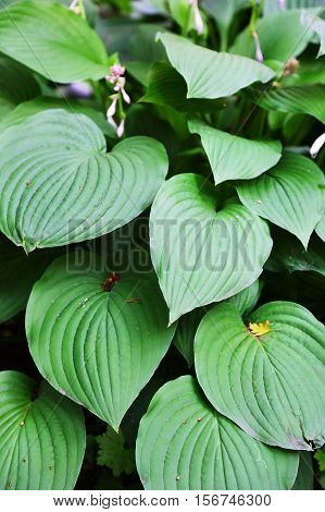 large green leaves of tropical plants, vertical image