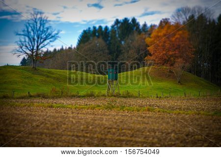 Autumn tress in the south of bavaria.