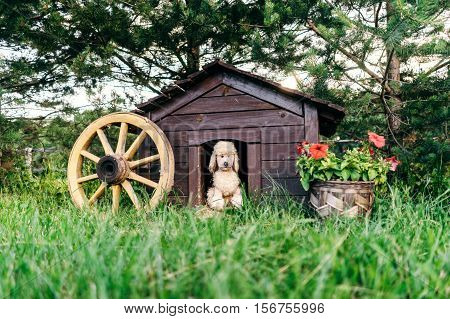 Plush dog in this dog doghouse. Surrounded by a beautiful lawn and pots with flowers.