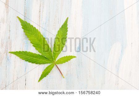 marijuana plant on a bright wooden background