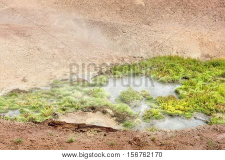 Geothermal grass plant growing in boiling water in Yellowstone Mud Volcano area