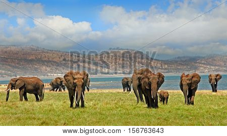 Herd of elephants on the lush green plains in Bumi National Park - Zimbabwe, Southern Africa