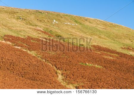 Evening Light Of Day On Hill, Autumn, Fall.