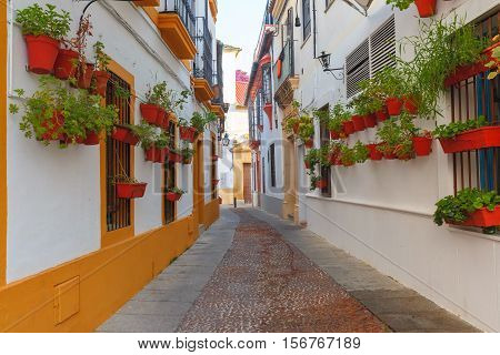 Flowers in flowerpot on the white walls on street of Cordoba, Andalusia, Spain