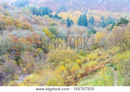 Pastoral fields trees in morning Autumn Fall. Powys Wales. Low sunlight green peaceful