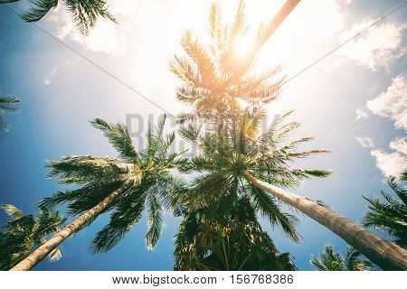 Palm Trees Against Blue Sky Toned Effect Nature Landscape Tropical Background Holiday Travel Design. View Up