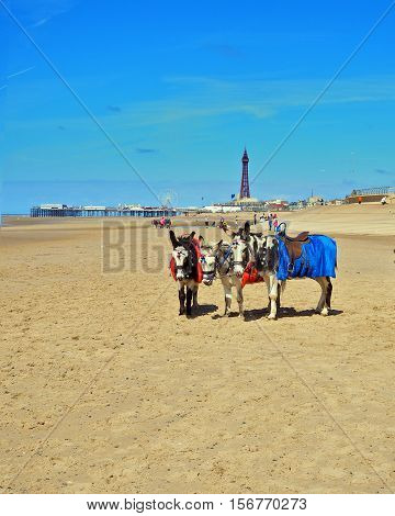 Blackpool beach and promenade with donkey ride
