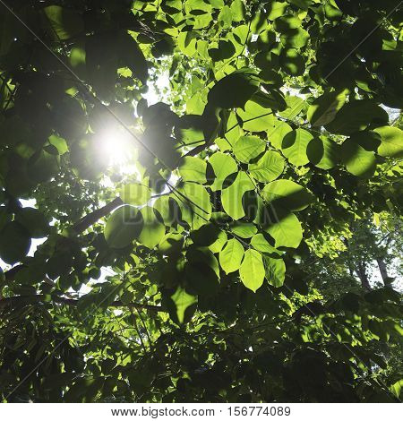 Sun peeking through tree leaves