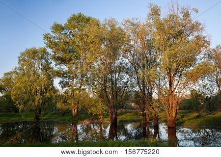 Deciduous trees in a warm sunset sunlight