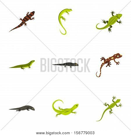 Iguana icons set. Flat illustration of 9 iguana vector icons for web