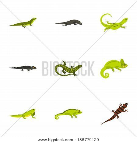 Chameleon icons set. Flat illustration of 9 chameleon vector icons for web