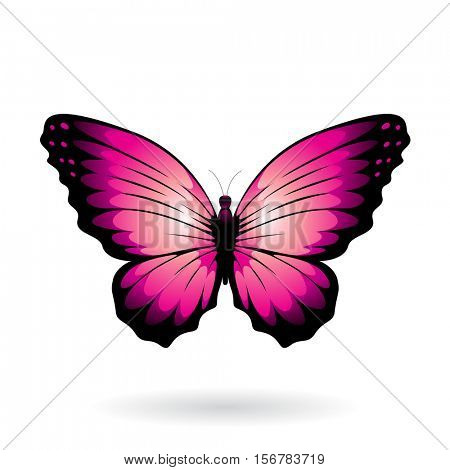 Vector Illustration of a Colorful Butterfly isolated on a white background