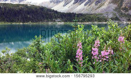wild flowers at Upper Dewey Lake, Alaska