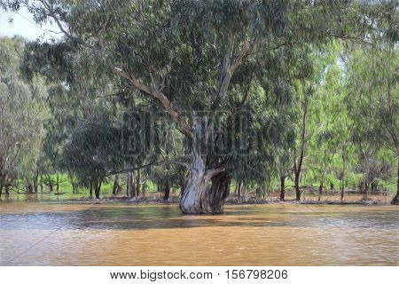 Gum Tree In Floodwaters