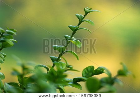 a branch with fresh green leaves on natural green background with selective focus