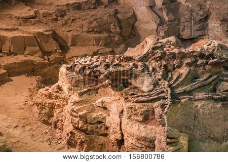 Skeleton of dinosaur fossil,Old Dinosaur Fossil in rock and sand