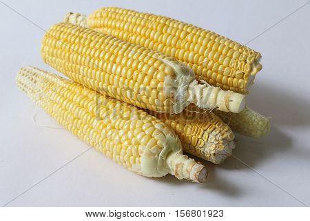 Fresh raw corn on white isolated background