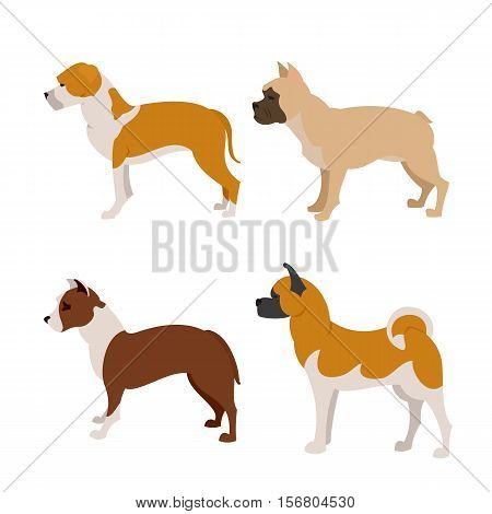 Collection of purebred dogs french bulldog, pittbull and staffordshire terrier, vector illustration