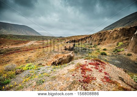 colorful plants in arid volcanic terrain in mountains in Lanzarote, Spain