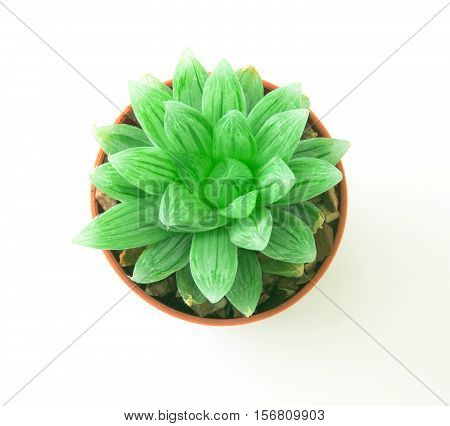 the succulents plant in pot on white background overhead or top view