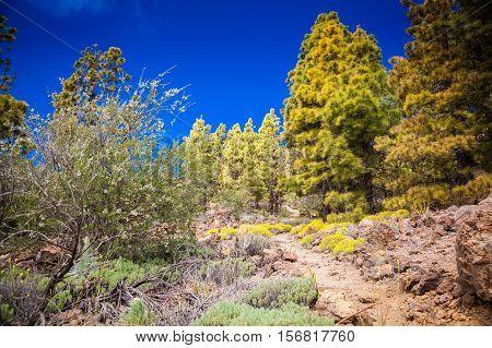 Green Landscape In The Vilaflor