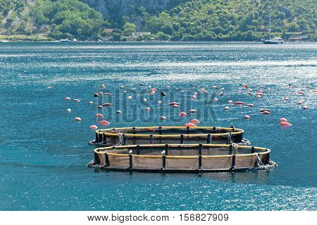 Small fish and mussel farm, toned image, horizontal image,