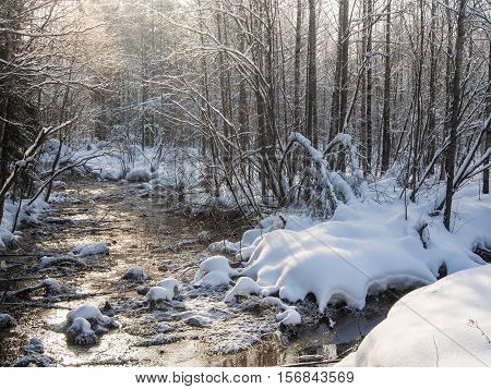 small forest river on a cold winter day