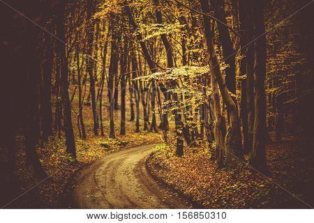 Fall Foliage Scenic Forest Road with Shallow Depth of Field. Autumn Foliage.