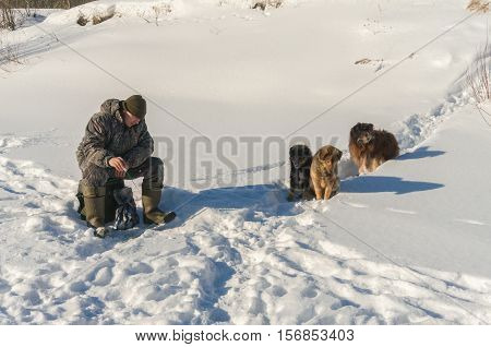 On winter fishing stray dogs wait when the fisherman catch fish