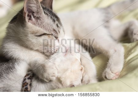 little newborn cat sleep on bed with her family