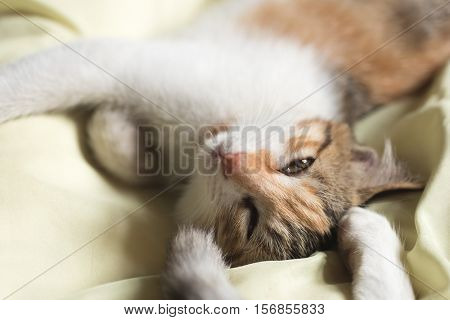 little cat sleep on bed