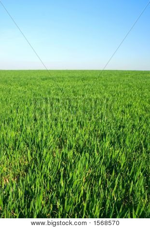 Green Grass On Horzon With Blue Sky....Green Grass On Horzon Wit