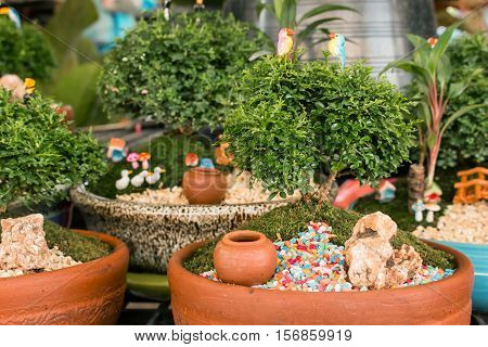 Murraya paniculata plant tree in pot on garden
