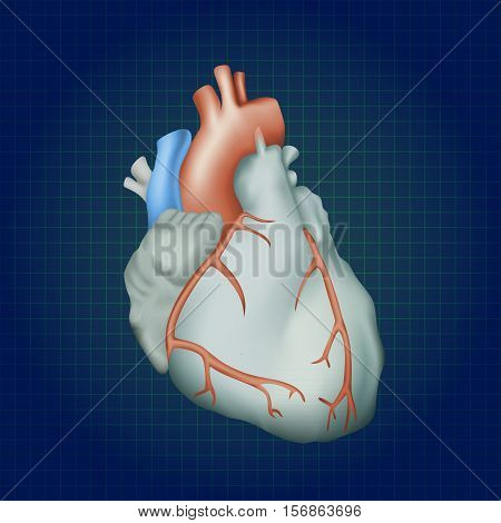 Human heart. Anatomy illustration. Colorful image, dark blue science background